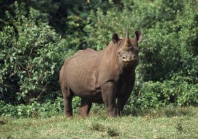 Reflections on Hunting — Black Rhinos and OtherAnimals