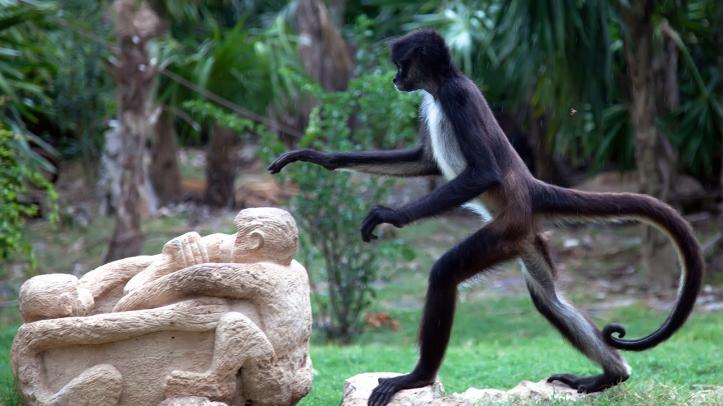 spider-monkey-walking-23878235 kids-nationalgeographic-com